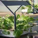 IKEA Just Launched An Indoor Garden That Never Stops Growing Food (Video Inside)