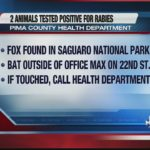 Wild animals found with rabies in public areas