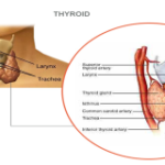 Home Test to Check the Thyroid Gland