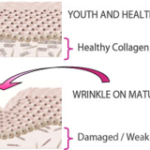 Learn How to Improve the Synthesis of Collagen  The Key to Eternal Youth
