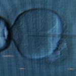 Report: Scientists edit human embryos for first time in US