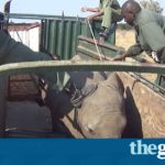 Exclusive: footage shows young elephants being captured in Zimbabwe for Chinese zoos